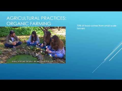 Portugal 1 Intensive vs Organic Farming