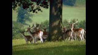 Слушаем голоса животных Сибири