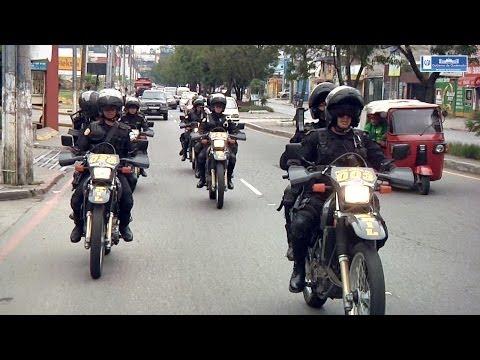 Lobos patrullan calles y avenidas de la ciudad