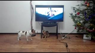 Реакция собаки на фильм