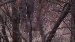 Public Land Deer Hunting in Iowa