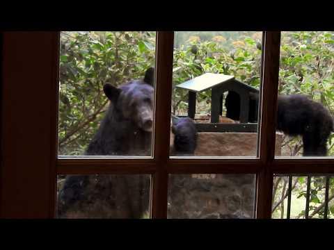 Mama and Baby Bear visit.