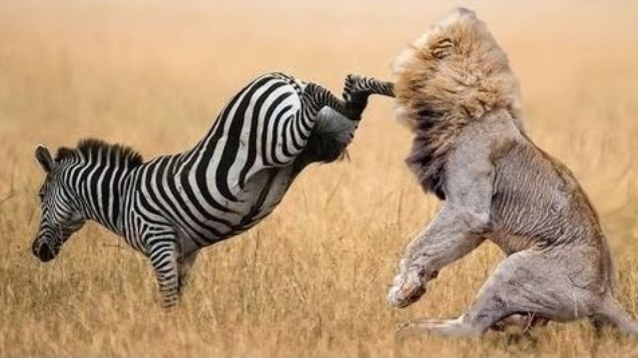 When Prey Fights Back   Most Amazing Animal Attack Fails 2016   YouTube