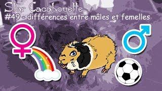Différences entre mâles et femelles