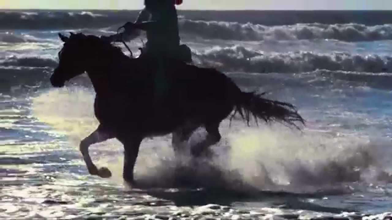 som de cavalo galopando