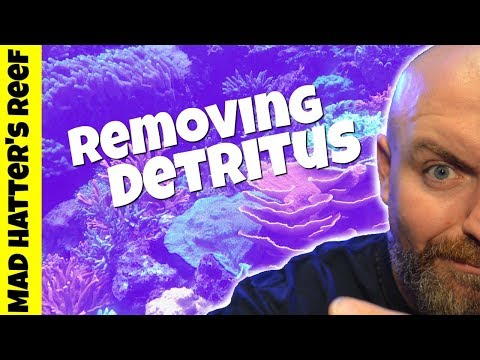 How to Remove Detritus From Your Reef Tank