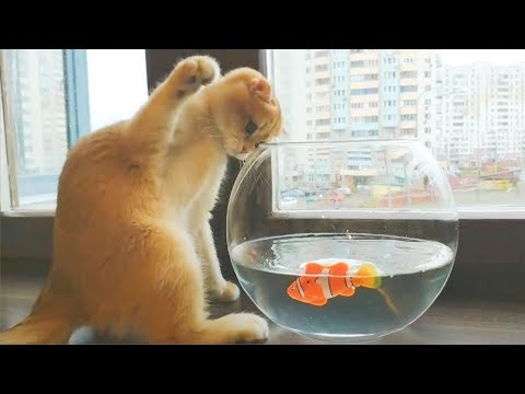 Funny Cat Reaction to Sea Animals - Cats and Sea Animals Reaction Compilation