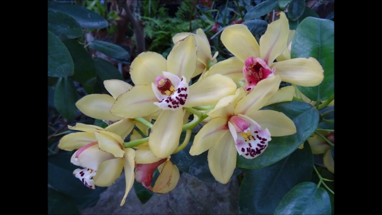 1001 Orchidées 2017 Jardin des Plantes Paris - YouTube