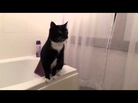 And What Would Your Cat Do In The Bathroom?