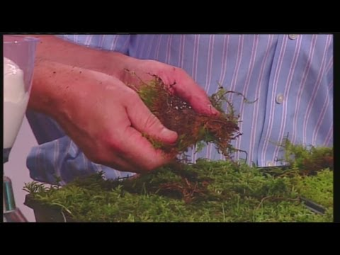Mass Appeal Tips for growing moss in your yard