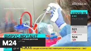 Попова рассказала о мутациях коронавируса - Москва 24
