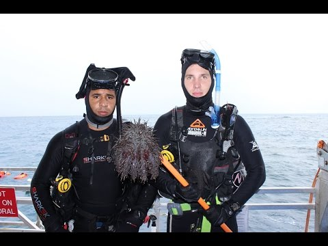 The Underwater Army Tackling Crown Of Thorns Starfish