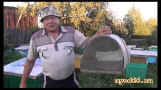 Роение пчел: как мы ловим рой на своей пасеке