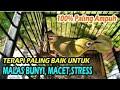 Kecial Kuning Ciak Ciak Iwik Iwik Untuk Pancingan Macet Malas Bunyi Stress  Mp3 - Mp4 Download