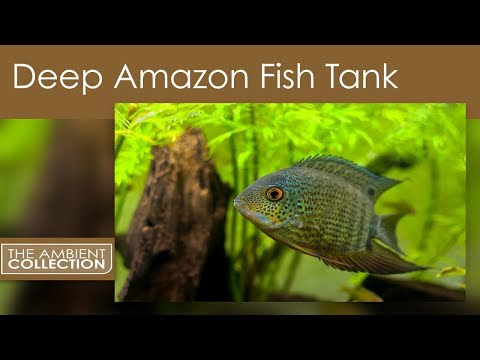 Deep amazon fish tank from the dvd south american for Amazon fish tanks