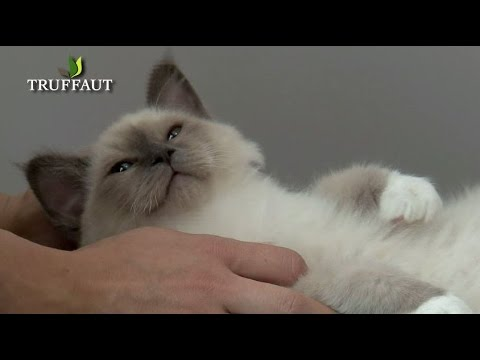 Adopter Un Chaton : Suivez Nos Conseils ! - Jardinerie Truffaut TV