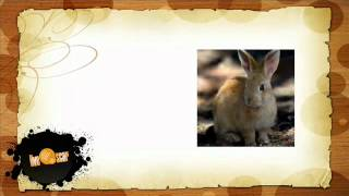 Говорить по испански - Урок животные (Animales)