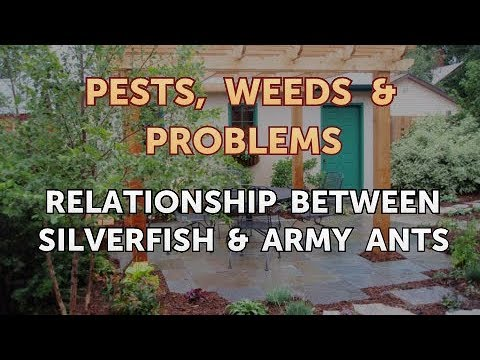 Relationship Between Silverfish & Army Ants