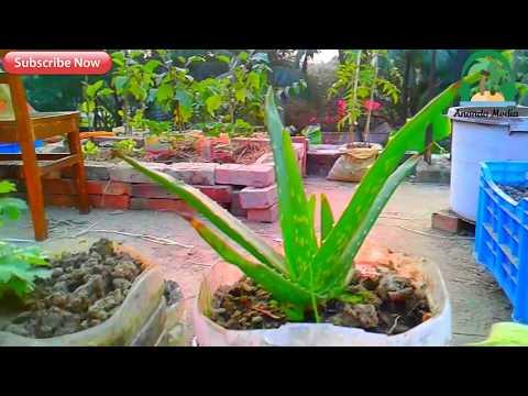 garden landscape design|Rooftop garden in our sweet home part -2 ছাদে বাগান করে আপনিও স্বাবলম্বী হোন