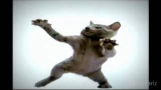 как танцуют животные