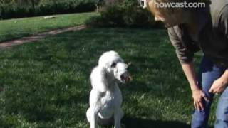 How To Train A Dog To Fetch