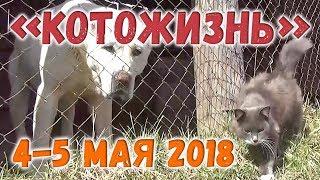 КОТОЖИЗНЬ! от 5.05.2018 ❖ BONUS: рыжий котенок-миллионер сегодня