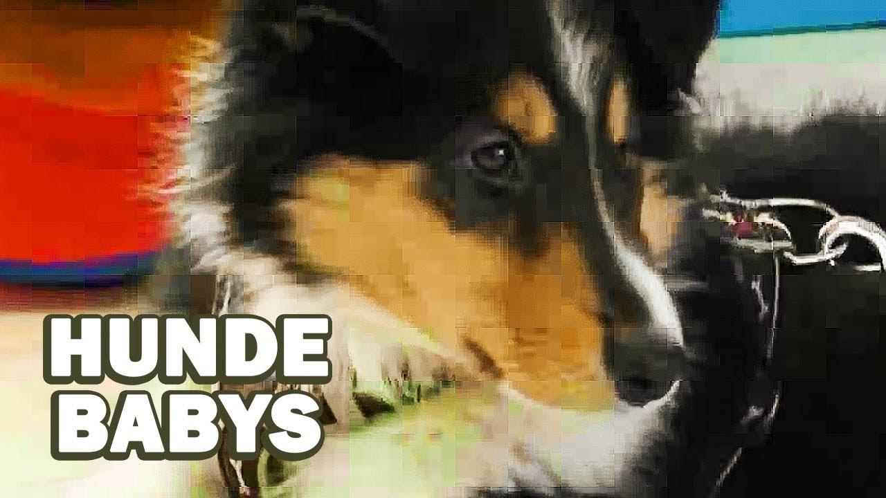 hundefilm