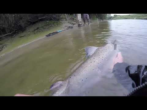 Salmon Fishing on the river Usk (2017)