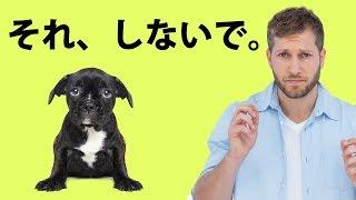犬が、本当は嫌がっている12の習慣