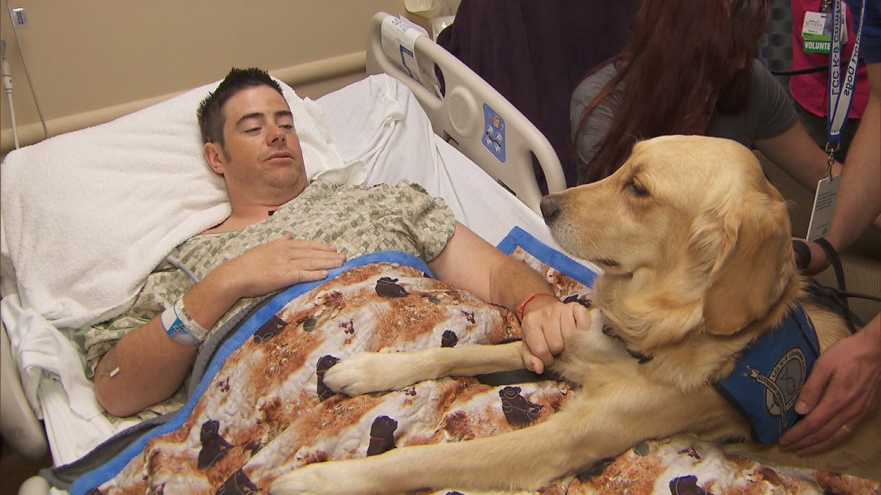 victims-of-vegas-shooting-recover-with-help-of-golden-retriever-therapy-dogs