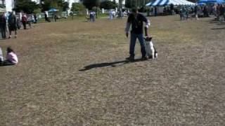 Dog Training Southwest K9 Academy