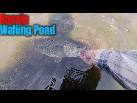Caught A Big Bass At Walling Pond (Oregon)