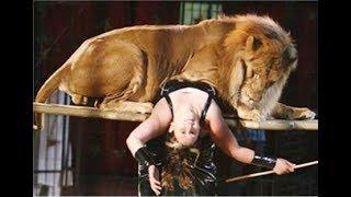 Xiếc hổ và sư tử Quốc tế