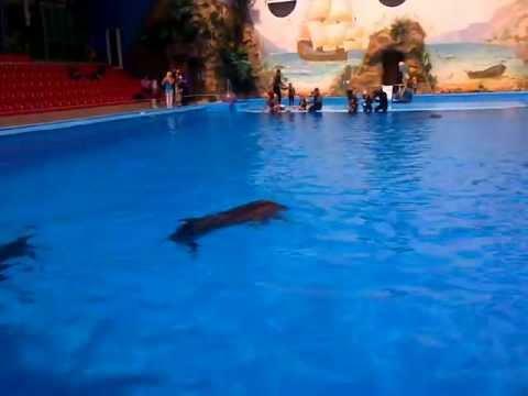 В Харьковском дельфинарии родился дельфиненок
