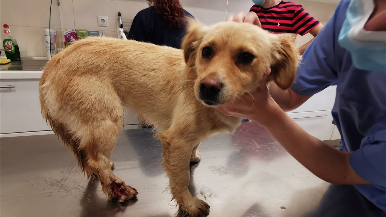 Stray dog was shot and then hit by car.