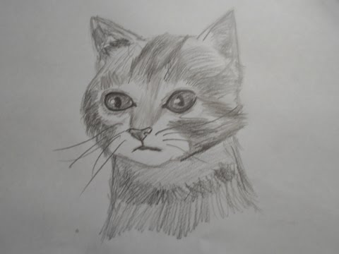 How to draw a realistic cat speed drawing narrated
