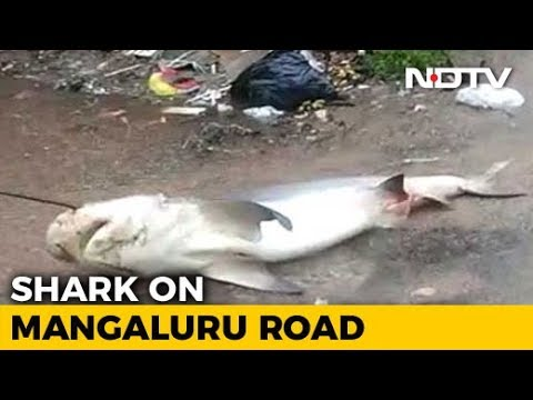 Watch Shark, 5 Foot Snake On Flooded Mangaluru Streets After Heavy Rain