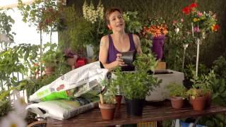 Sabines Gartenschule: Minze und Melisse