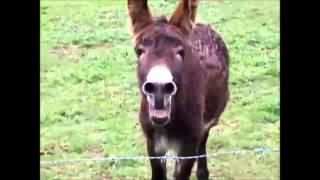 Family guy - Lois Mom Mum Mommy Donkey mix