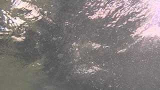 Подводная видео охота на Банном май 2013