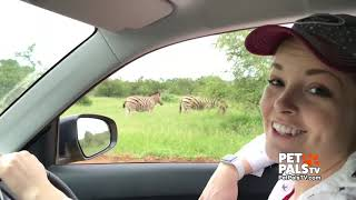 Brenna's Africa safari adventure