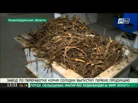 Алтей (трава) – полезные свойства и применение алтея