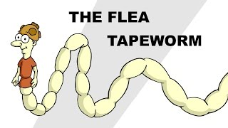 The Flea Tapeworm (Dipylidium caninum) - Plain and Simple