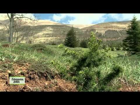 Liban - Echappées belles