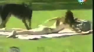 Собака маньяк, очень нравятся женщины Funny animals!!!!