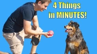 How To Teach Your Dog To Do 4 Things In Minutes (roll Over, Play Dead, Sit, Lie Down)