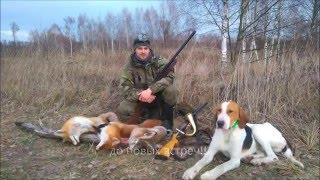 Один день охоты с гончими!!!