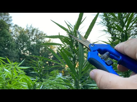 When and how to test your hemp! The basics of getting your COA for your hemp flower.