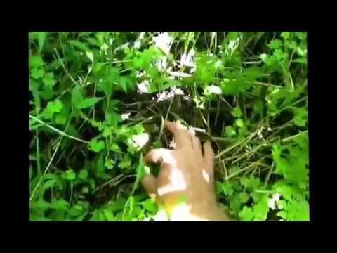 Australian Survivalism wild edibles in the bush.