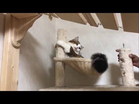 撤去作業を立てこもりで抵抗する猫